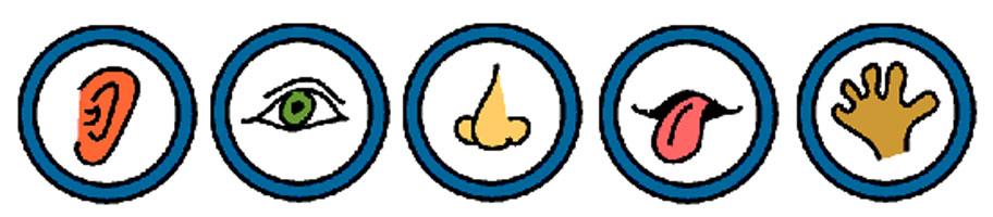 Zintuigen-icon2